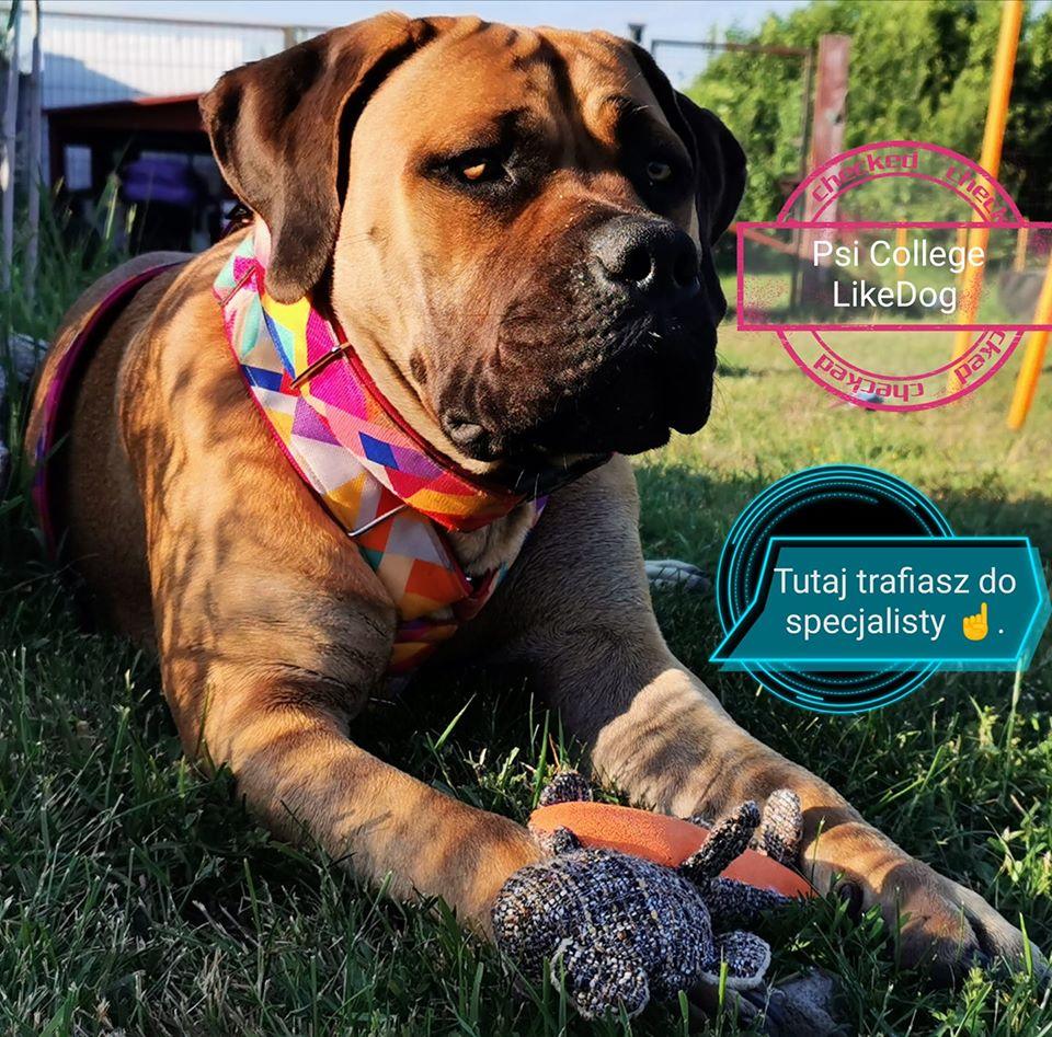 specjalista od psich zachowań