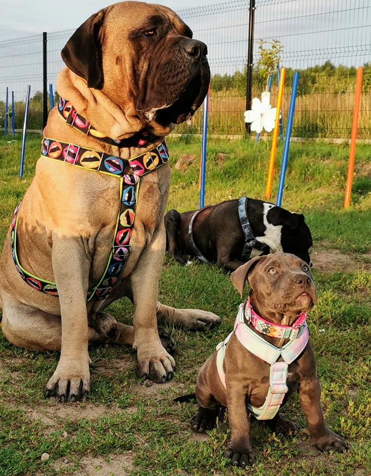 szkolenie psa kołobrzeg