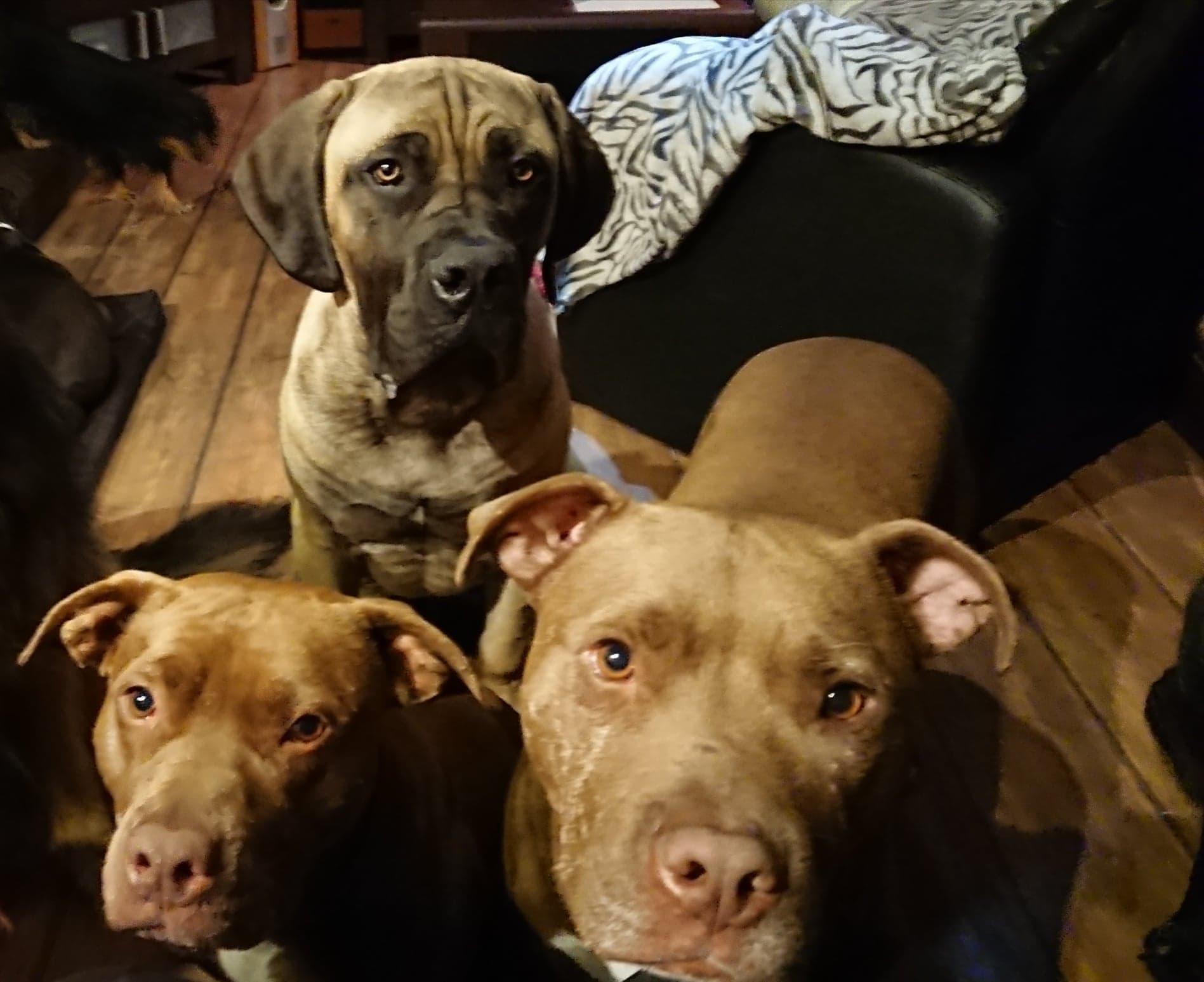 problemy behawioralne psów