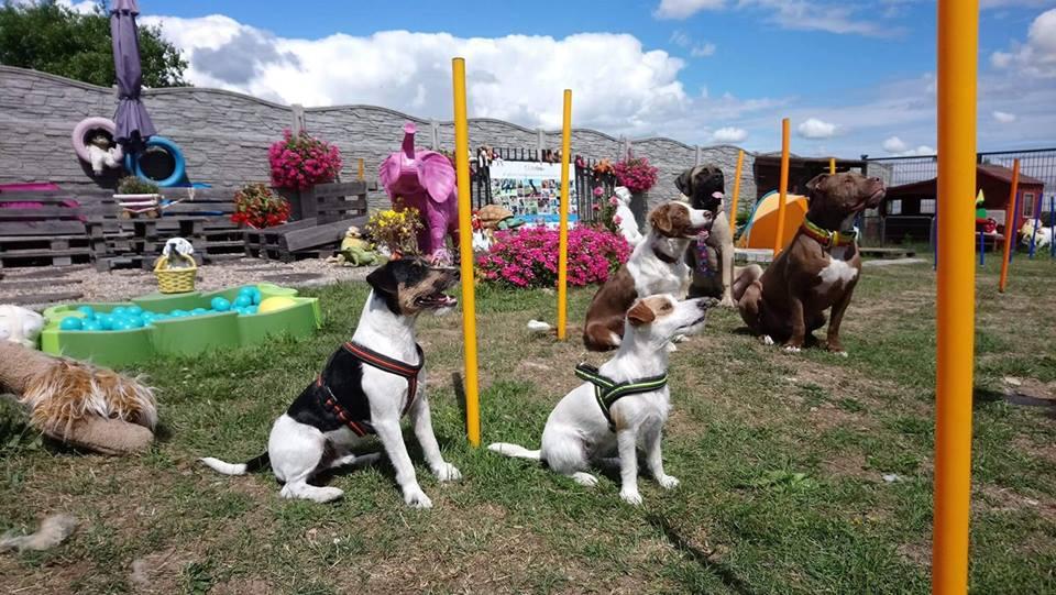 treningi rehabilitacyjne psów
