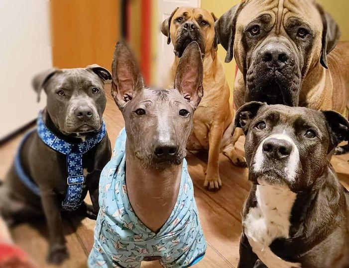 Życie i droga każdego psa, jaką będzie przebywał w swoim życiu będzie bardzo mocno uzależniona od człowieka, przy którym ten pies będzie przebywał.