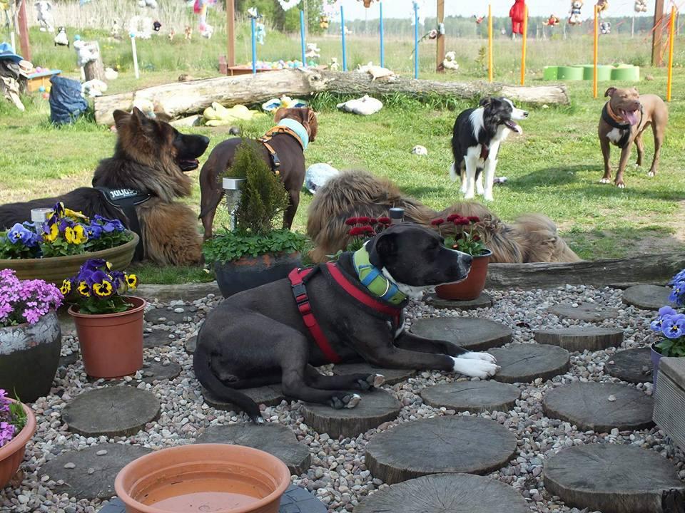 psie spotkania