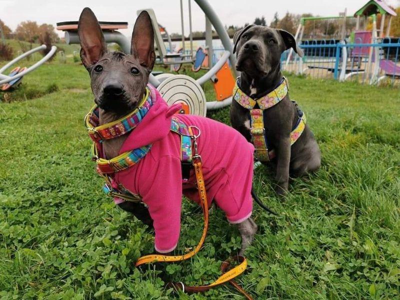 szkolenie psów zachodniopomorskie