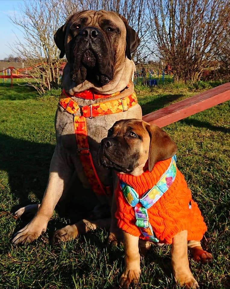 szkolenie psa szczecinek