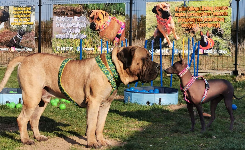 psie przedszkole szczecinek